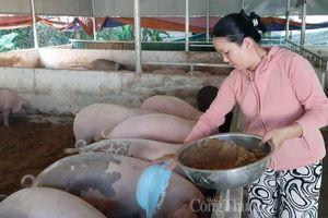 Giá lợn hơi hôm nay 8/8: Tiếp tục chuỗi ngày điều chỉnh giảm