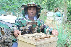 Nông nghiệp các tỉnh miền Trung: Dấu hiệu khởi sắc trong mùa dịch