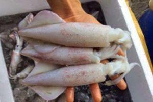 Thấy hải sản có đặc điểm này tuyệt đối không được mua, đó là dấu hiệu của thuốc tẩy trắng 'cực độc'