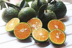 Cam giàu vitamin C nhưng ăn theo cách này dinh dưỡng biến thành độc dược, gây hại sức khỏe