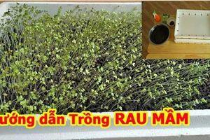 Lấy giấy ăn trồng rau mầm theo cách này cực đơn giản, chỉ 7 ngày sau rau mọc um tùm, xanh mướt