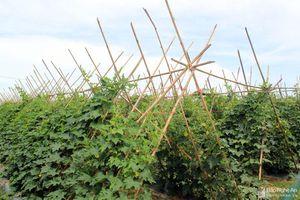 Nghệ An đặt mục tiêu gieo trồng 37.635 ha cây trồng vụ Đông 2020