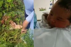 Bé sơ sinh sống sót kỳ diệu 17 tiếng sau khi bị mẹ ném xuống bụi rậm