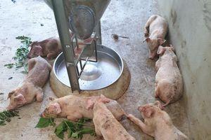Nghệ An: Người dân than trời vì trại lợn Đại Thành Lộc ô nhiễm nặng