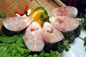 Cá basa được công nhận là thực phẩm giúp tăng tuổi thọ, chữa đau khớp tốt hơn nhân sâm