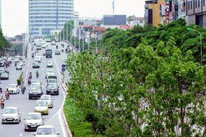 Cải tạo đảo giao thông vì một Thủ đô Xanh - Sạch - Đẹp