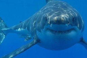 Cá mập sống gần núi lửa dưới đại dương có 'giác quan thứ sáu'