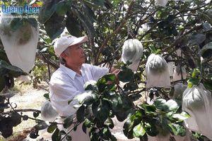 Trái cây Nghĩa Hành được cấp chứng nhận đăng ký nhãn hiệu