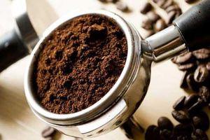 Uống cà phê xong đừng vội bỏ bã, tận dụng theo cách này bạn sẽ thu được thành quả bất ngờ