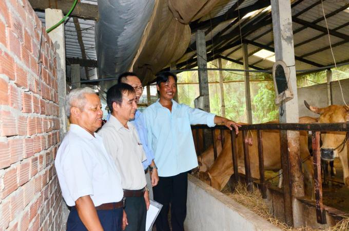 Trà Vinh: Tái cơ cấu chăn nuôi, ưu tiên phát triển đàn bò