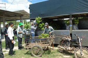 Ninh Thuận: Hỗ trợ giống mãng cầu Thái cho nông dân
