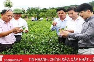 Những sản phẩm OCOP ở Hương Sơn đặc sắc, phát triển có chiều sâu