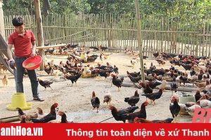 Hiệu quả mô hình liên kết chăn nuôi gà an toàn sinh học tại xã Tân Thành