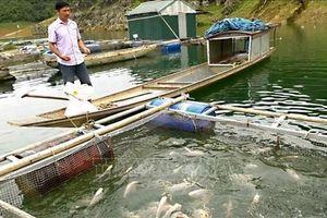 Nam Định: Giải pháp an toàn cho nghề nuôi cá lồng trong mùa mưa bão