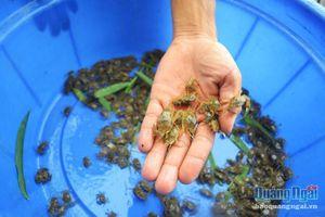 Cấm đánh bắt cá mùa sinh sản: Luật đã có, nhưng khó thực thi