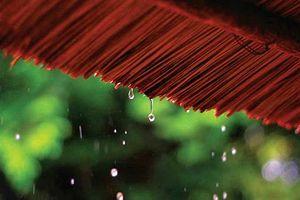 Nhật ký cuộc sống : Những suy ngẫm từ hiện tượng của thiên nhiên