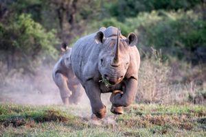 15 năm chụp ảnh động vật hoang dã ở châu Phi