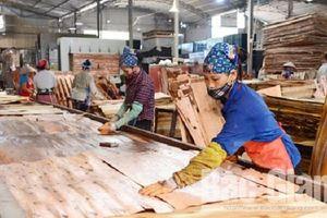 Ván gỗ cao su ghép dạng tấm được áp mã HS 4418 có thuế suất 0%