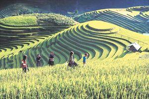 Mù Cang Chải (Yên Bái): Du lịch xanh gắn với bảo tồn bản sắc văn hóa