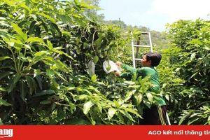 Nông dân Tri Tôn thi đua sản xuất - kinh doanh giỏi