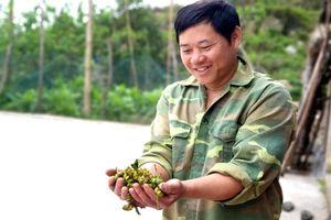 Bình Liêu: Người dân mong chờ chính sách mới
