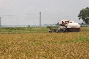 Quảng Trị: Gặt sớm, ăn chắc vụ hè thu