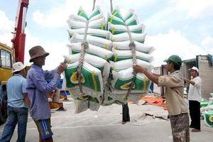Gạo 5% tấm của Việt Nam đang giao dịch cao nhất thế giới