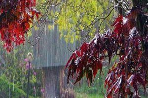 Đâu phải mưa ngâu