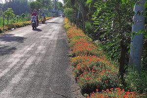 Những con đường rác được tô điểm sắc hoa ở Sài Gòn