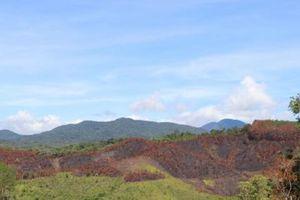 Kỷ luật khiển trách 3 cán bộ để cháy hơn 11 ha rừng