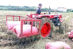 Huyện Vĩnh Cửu có thêm đặc sản gạo hữu cơ ST