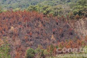 Để cháy gần 12 héc-ta rừng, nhiều cán bộ bảo vệ rừng bị kỷ luật