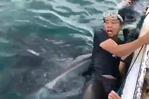 Du khách lặn biển khiếp sợ trước hàm cá mập voi