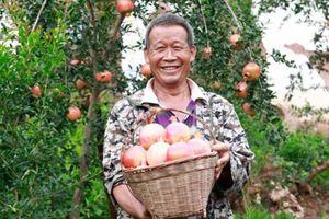 Sàn nông sản online thu hàng tỷ USD mỗi tháng