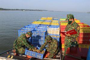 Bắt quả tang vụ vận chuyển trái phép 30 nghìn con vịt giống vào Việt Nam