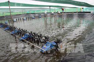 Vì sao diện tích nuôi trồng thủy sản bị thiệt hại tăng trên 2 lần?