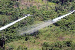 Nhiều rủi ro khi Colombia muốn phun hóa chất để ngăn chặn cocaine
