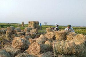 Tận dụng phụ phẩm nông nghiệp: Lợi đủ đường