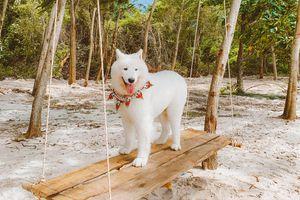 Kinh nghiệm vi vu Phú Quốc cùng thú cưng