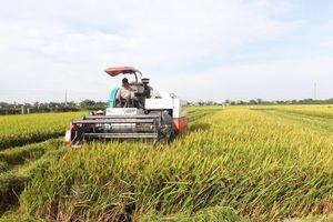 Nông nghiệp Nam Định chuyển từ số lượng sang chất lượng
