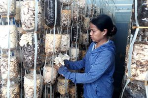 Tận dụng hiệu quả phụ phẩm nông nghiệp