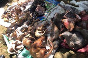 Choáng với 2 ổ nuôi nhốt, cấp đông động vật quý hiếm ở Lâm Đồng