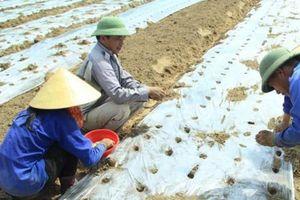 Nông nghiệp miền Trung: Tiếp tục đẩy mạnh phát triển kinh tế tại địa phương