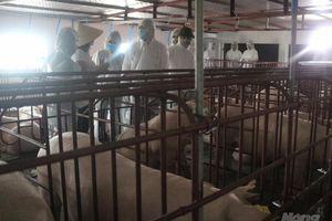 Thứ trưởng Phùng Đức Tiến đánh giá cao công tác tái đàn lợn của Nam Định