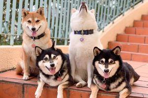 Cô chó luôn 'phá game' khi chụp ảnh nhóm có gợi bạn nhớ tới đứa bạn 'yêu quái' nào không?