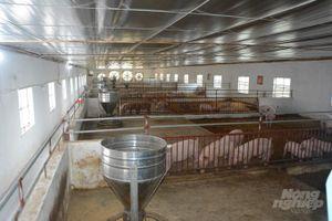 Nam Định hướng tới chăn nuôi lợn an toàn dịch bệnh