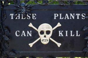 Rùng mình khu vườn 'sờ vào đâu cũng chết'