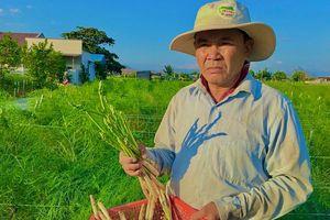 Ninh Thuận: Nông dân tỷ phú vùng đất 'sa mạc' đi lên từ hai bàn tay trắng