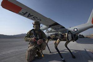 Ngày xưa Khổng Minh có trâu gỗ, ngựa máy, nay Không quân Mỹ có chó máy gác sân bay