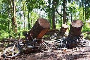 Khai thác rừng trái phép bị gỗ đè chết trên đường vận chuyển